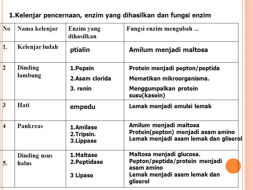 Kelenjar pencernaan, enzim yang dihasilkan dan fungsi enzim No