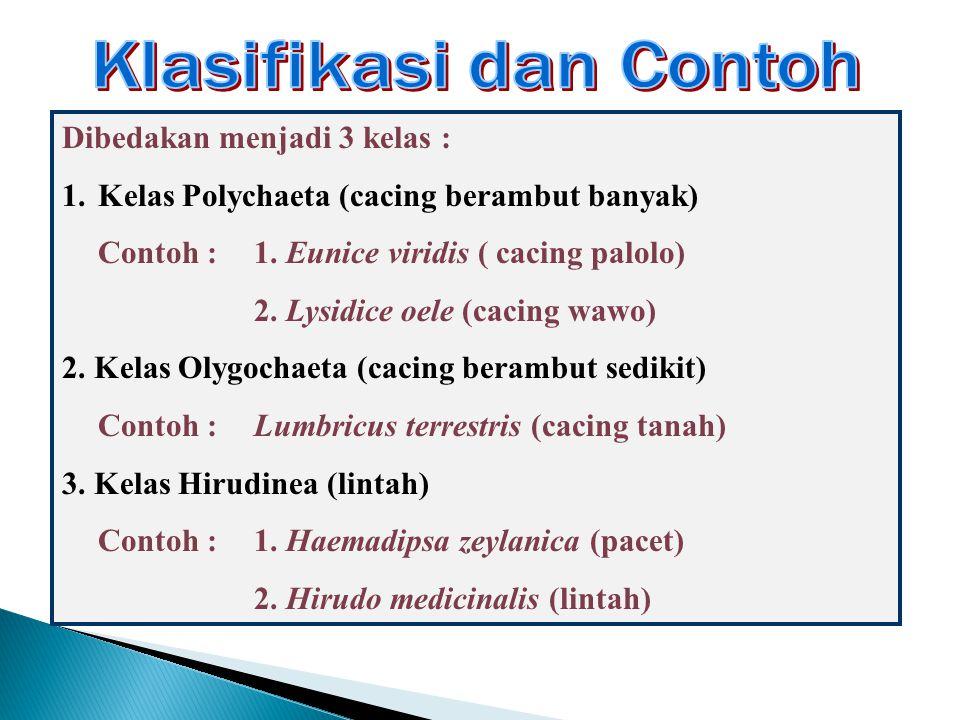 Klasifikasi dan Contoh