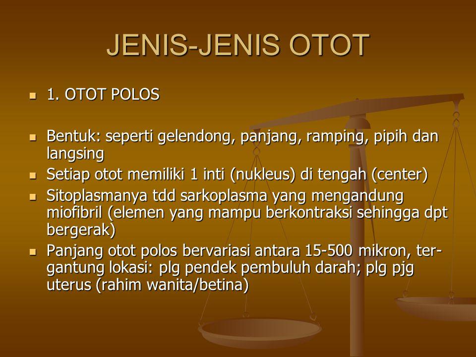 JENIS-JENIS OTOT 1. OTOT POLOS