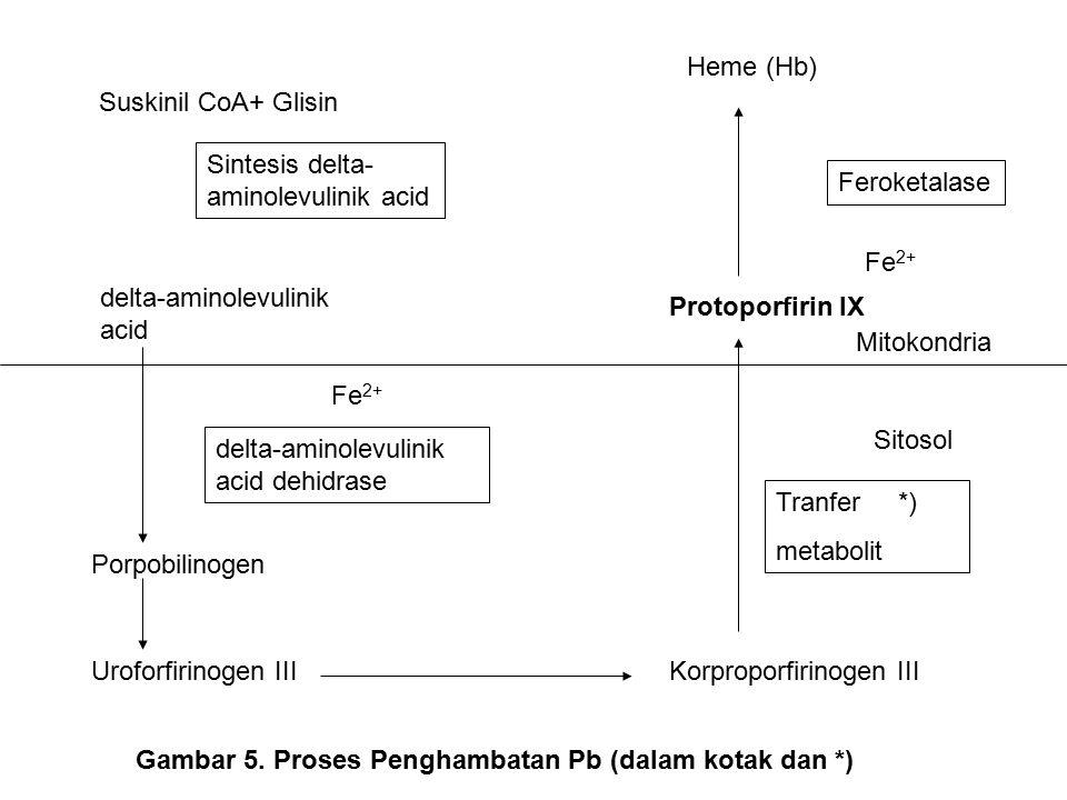 Heme (Hb) Suskinil CoA+ Glisin. Sintesis delta-aminolevulinik acid. Feroketalase. Fe2+ delta-aminolevulinik acid.