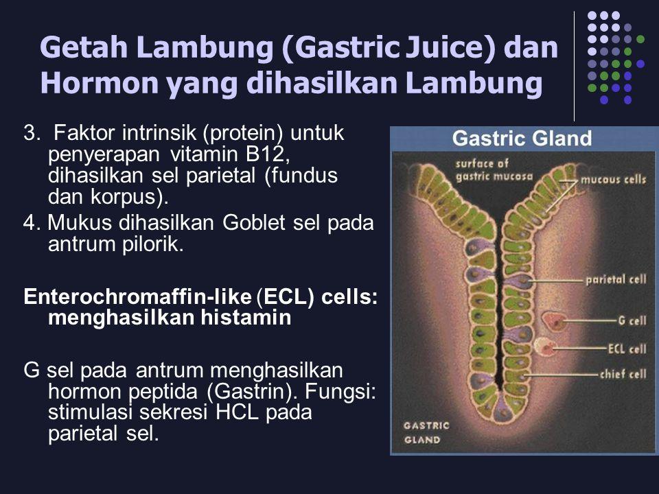 Getah Lambung (Gastric Juice) dan Hormon yang dihasilkan Lambung