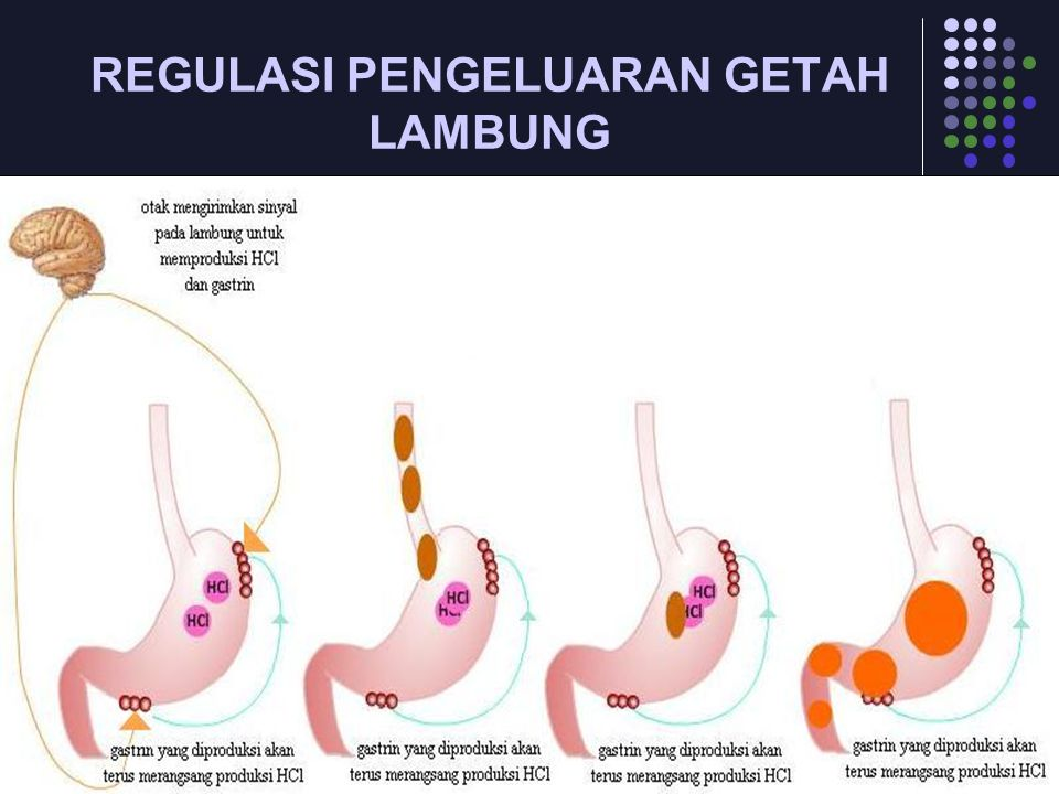 REGULASI PENGELUARAN GETAH LAMBUNG
