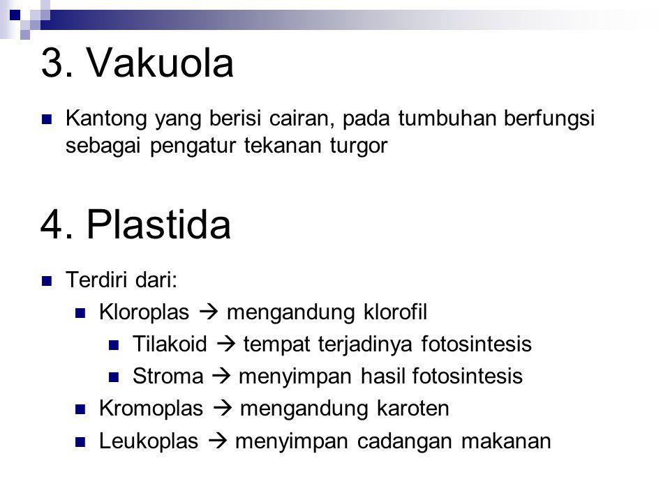 3. Vakuola Kantong yang berisi cairan, pada tumbuhan berfungsi sebagai pengatur tekanan turgor. 4. Plastida.