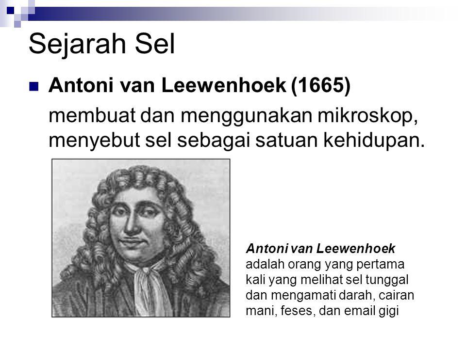 Sejarah Sel Antoni van Leewenhoek (1665)