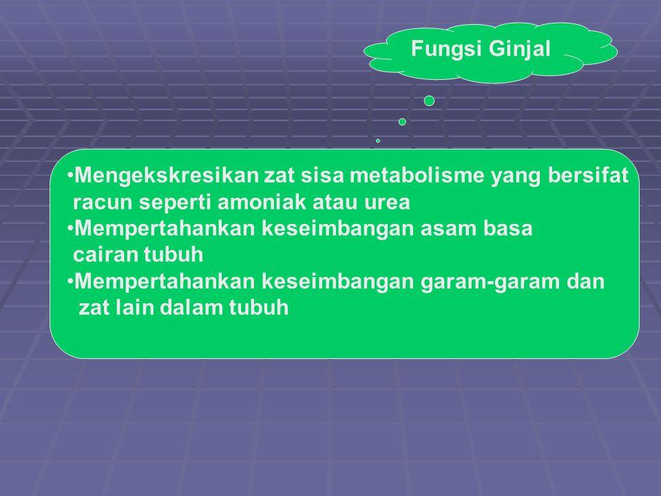 Fungsi Ginjal Mengekskresikan zat sisa metabolisme yang bersifat. racun seperti amoniak atau urea.