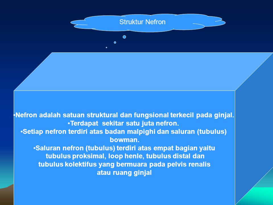 Nefron adalah satuan struktural dan fungsional terkecil pada ginjal.