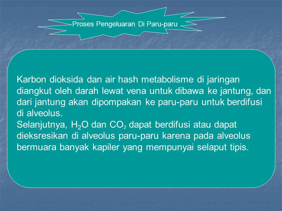 Proses Pengeluaran Di Paru-paru