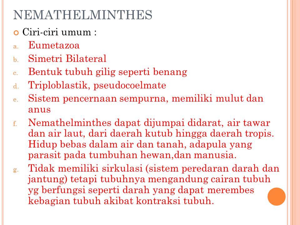NEMATHELMINTHES Ciri-ciri umum : Eumetazoa Simetri Bilateral