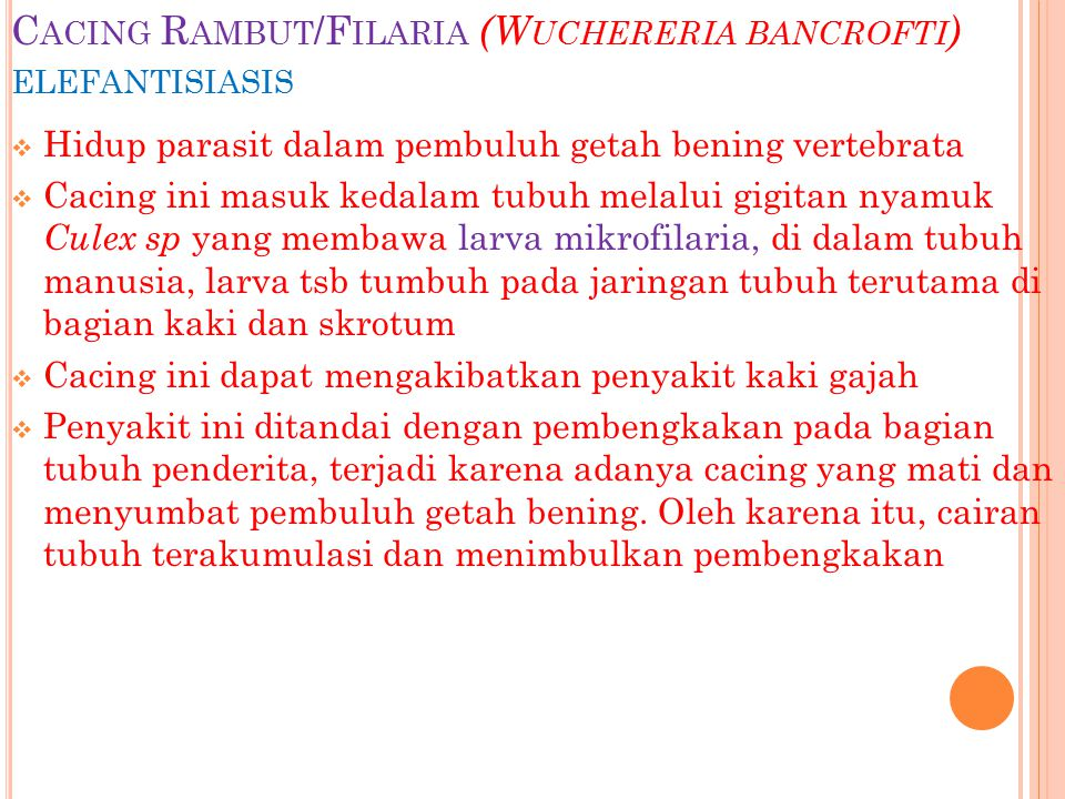 Cacing Rambut/Filaria (Wuchereria bancrofti) elefantisiasis