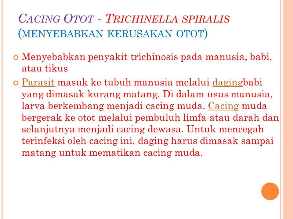 Cacing Otot - Trichinella spiralis (menyebabkan kerusakan otot)