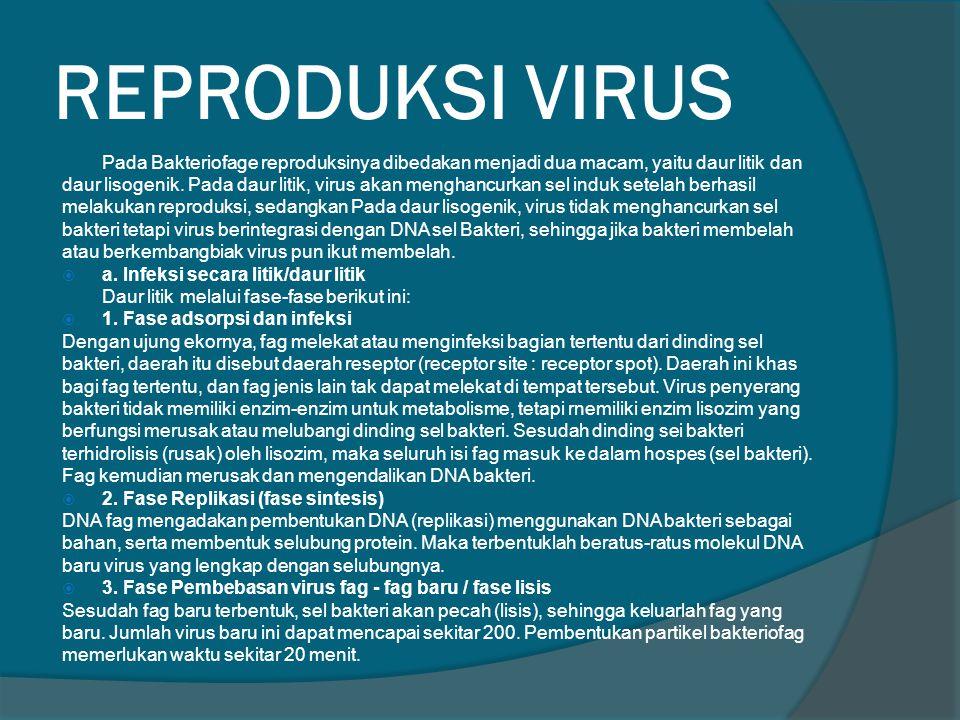REPRODUKSI VIRUS Pada Bakteriofage reproduksinya dibedakan menjadi dua macam, yaitu daur litik dan.