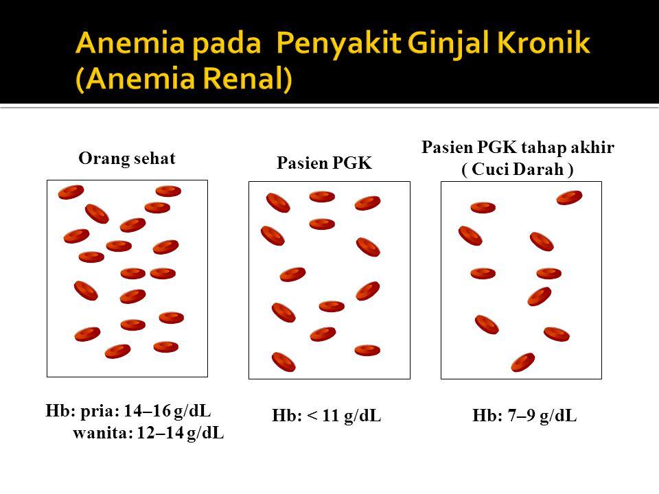 Anemia pada Penyakit Ginjal Kronik (Anemia Renal)