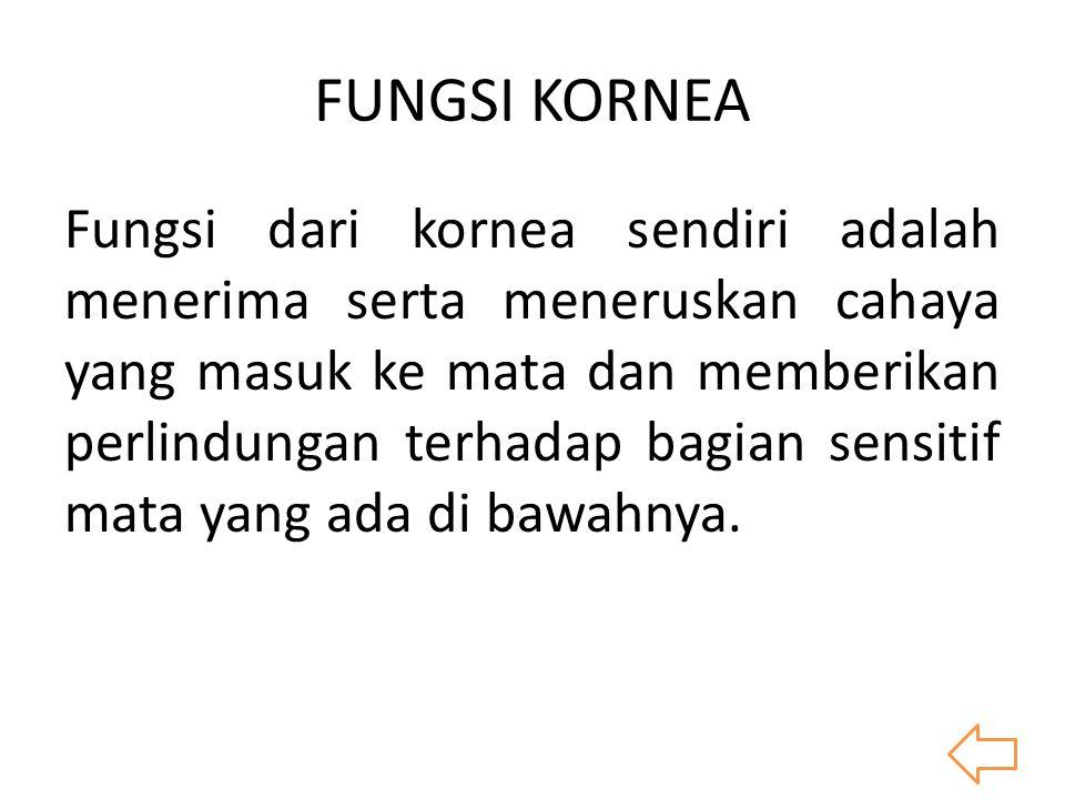 FUNGSI KORNEA