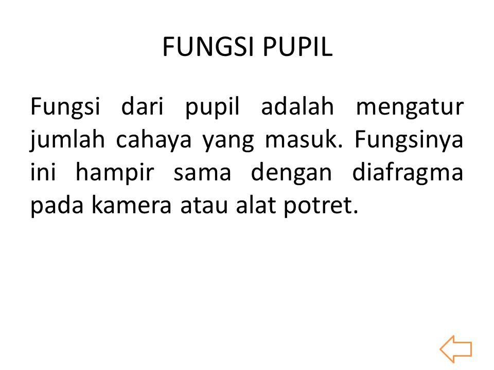 FUNGSI PUPIL Fungsi dari pupil adalah mengatur jumlah cahaya yang masuk.