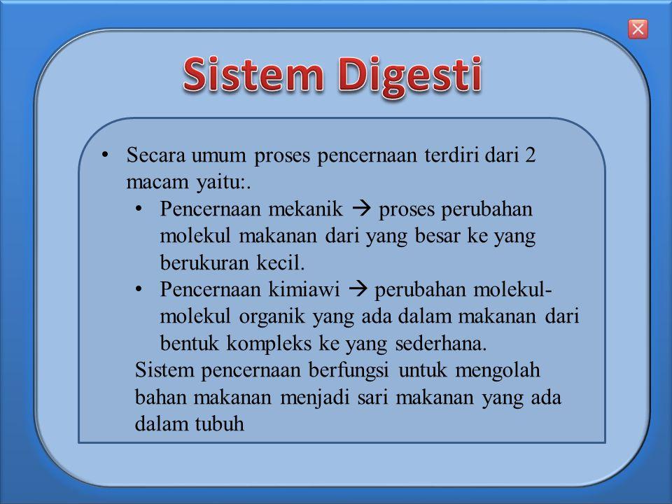 Sistem Digesti Secara umum proses pencernaan terdiri dari 2 macam yaitu:.
