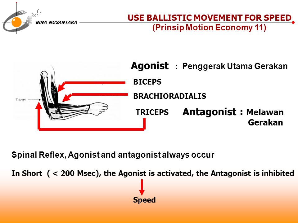 USE BALLISTIC MOVEMENT FOR SPEED (Prinsip Motion Economy 11)