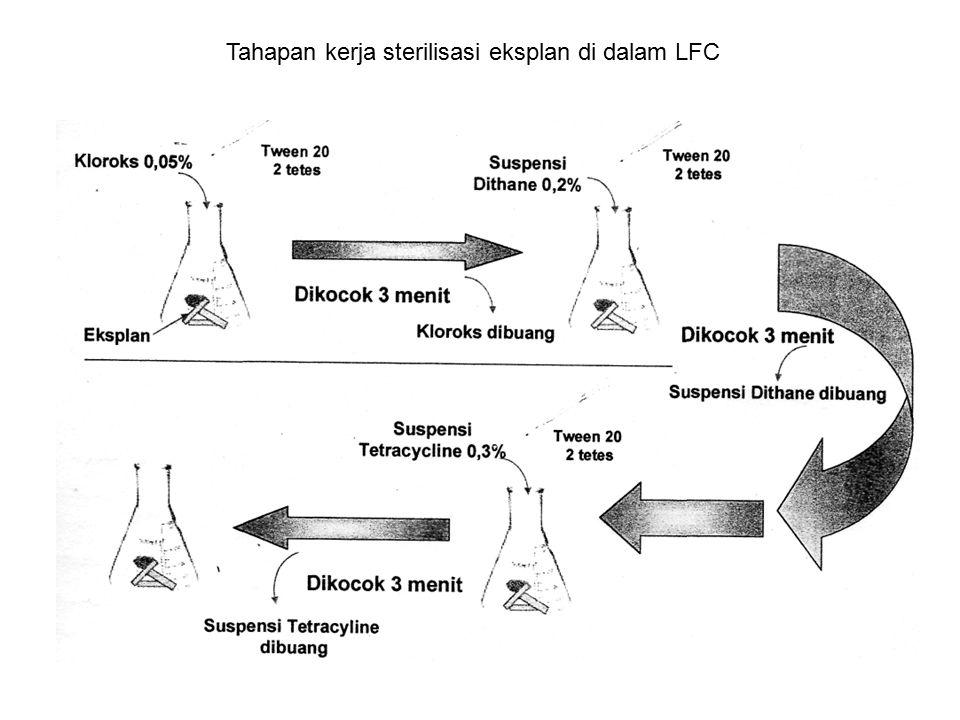 Tahapan kerja sterilisasi eksplan di dalam LFC