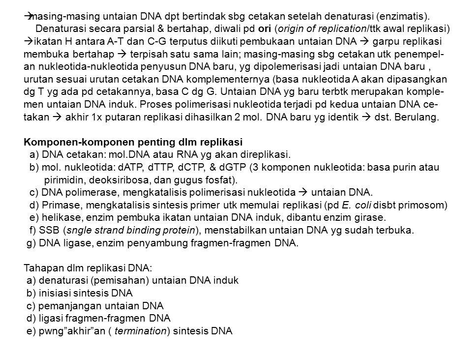 masing-masing untaian DNA dpt bertindak sbg cetakan setelah denaturasi (enzimatis).