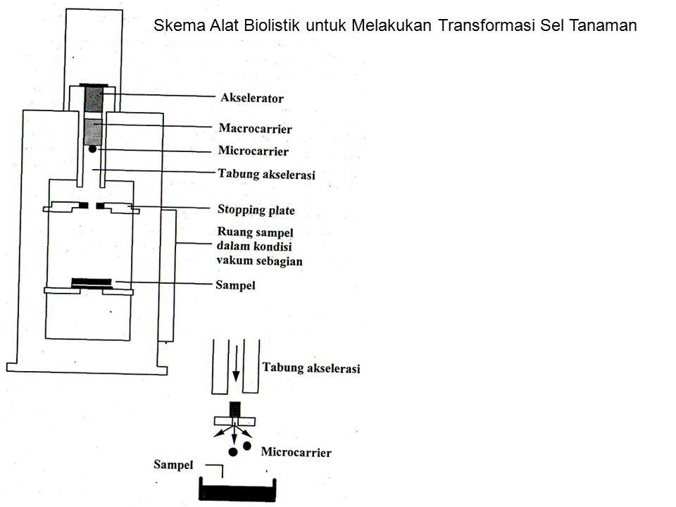 Skema Alat Biolistik untuk Melakukan Transformasi Sel Tanaman