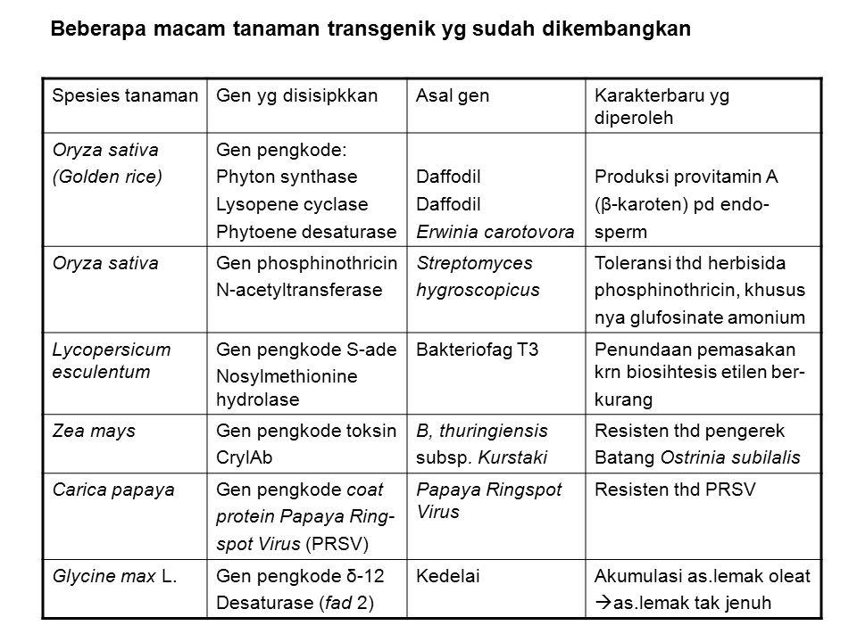 Beberapa macam tanaman transgenik yg sudah dikembangkan