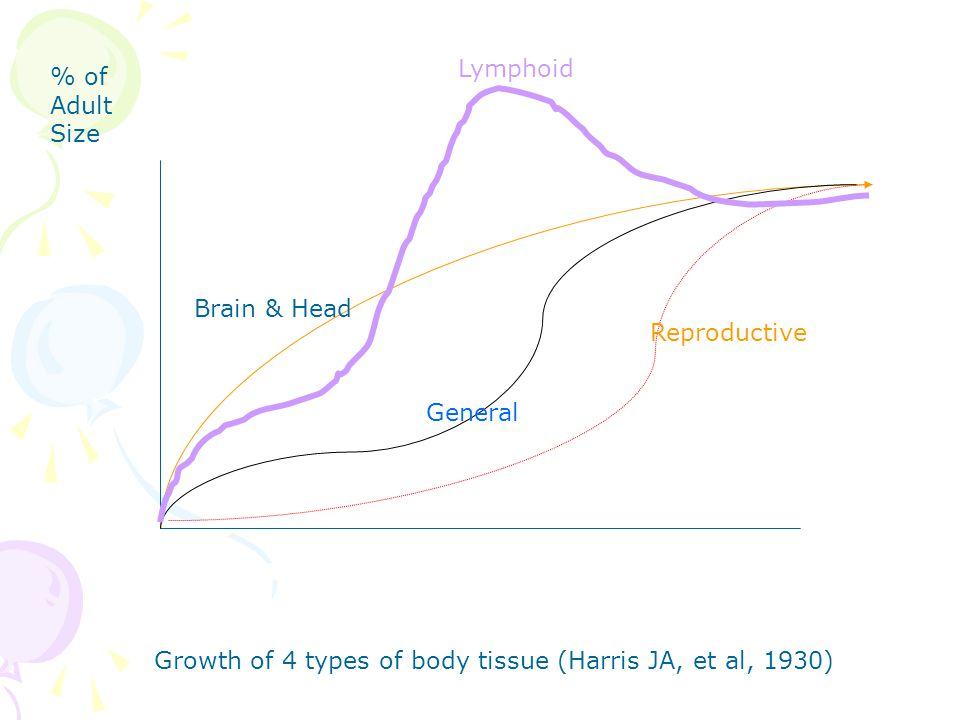 Lymphoid % of Adult Size. Brain & Head. Reproductive.