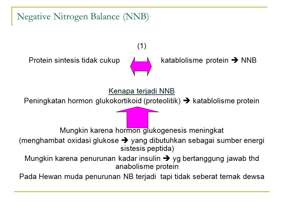Negative Nitrogen Balance (NNB)