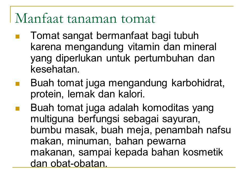 Manfaat tanaman tomat Tomat sangat bermanfaat bagi tubuh karena mengandung vitamin dan mineral yang diperlukan untuk pertumbuhan dan kesehatan.