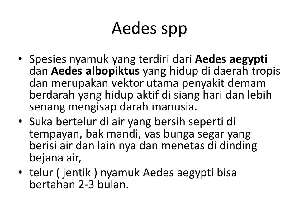 Aedes spp