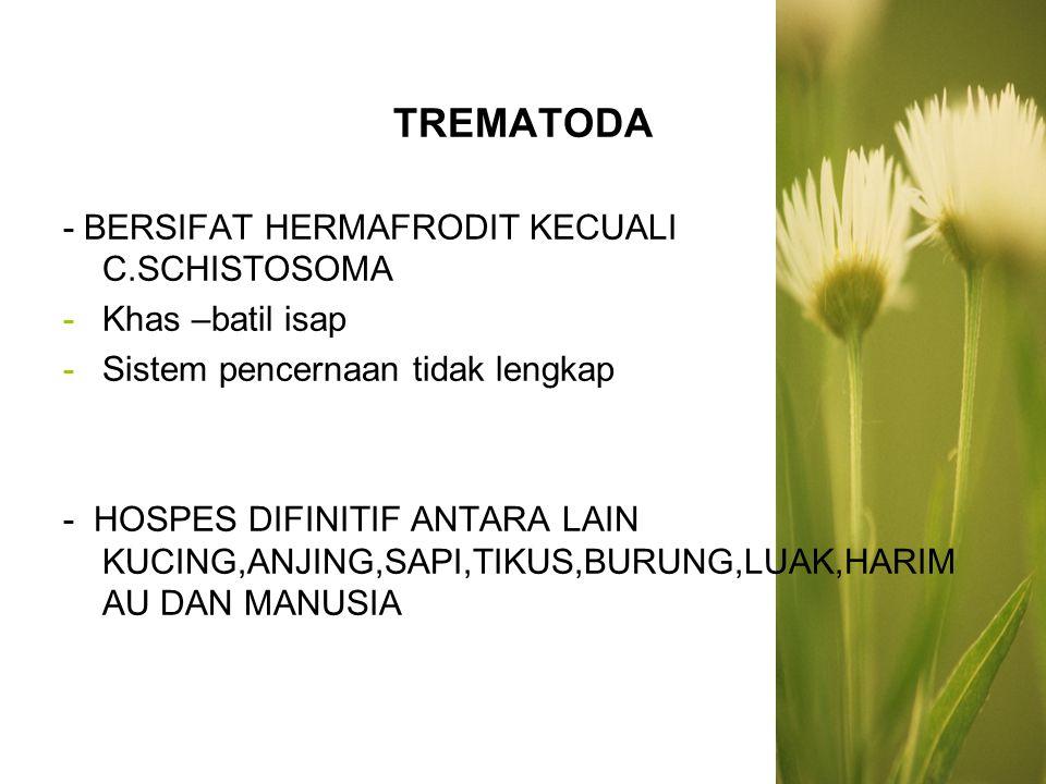 TREMATODA - BERSIFAT HERMAFRODIT KECUALI C.SCHISTOSOMA