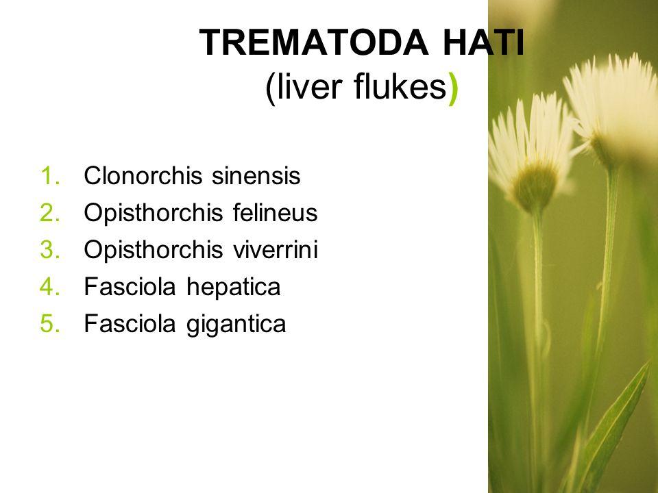 TREMATODA HATI (liver flukes)