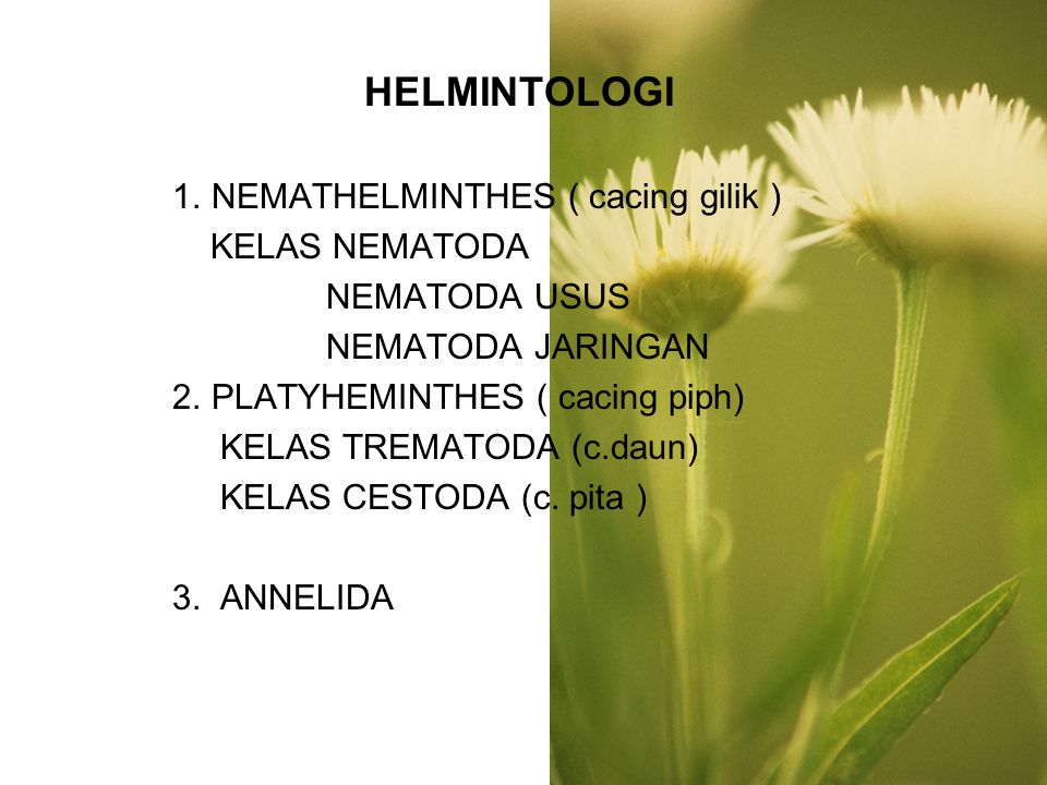 HELMINTOLOGI 1. NEMATHELMINTHES ( cacing gilik ) KELAS NEMATODA