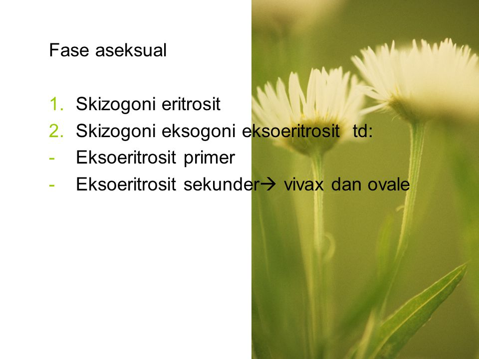 Fase aseksual Skizogoni eritrosit. Skizogoni eksogoni eksoeritrosit td: Eksoeritrosit primer.