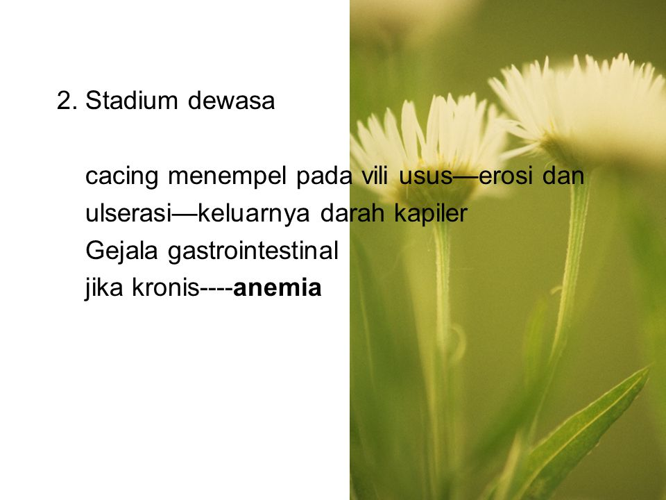 2. Stadium dewasa cacing menempel pada vili usus—erosi dan. ulserasi—keluarnya darah kapiler. Gejala gastrointestinal.