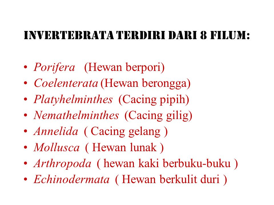 Invertebrata terdiri dari 8 filum: