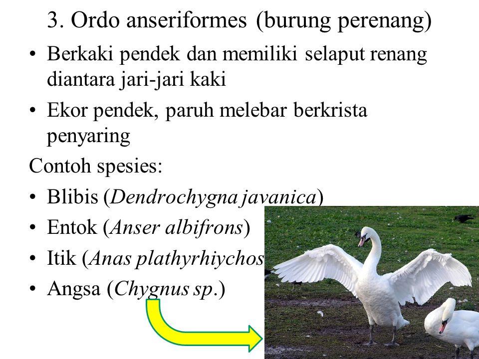 3. Ordo anseriformes (burung perenang)