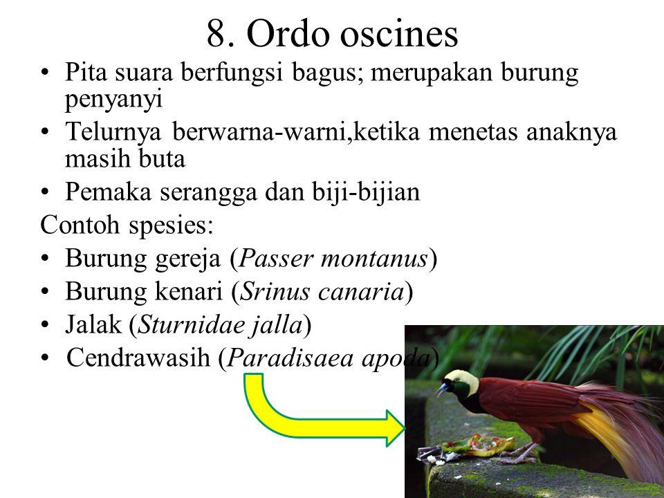 8. Ordo oscines Pita suara berfungsi bagus; merupakan burung penyanyi