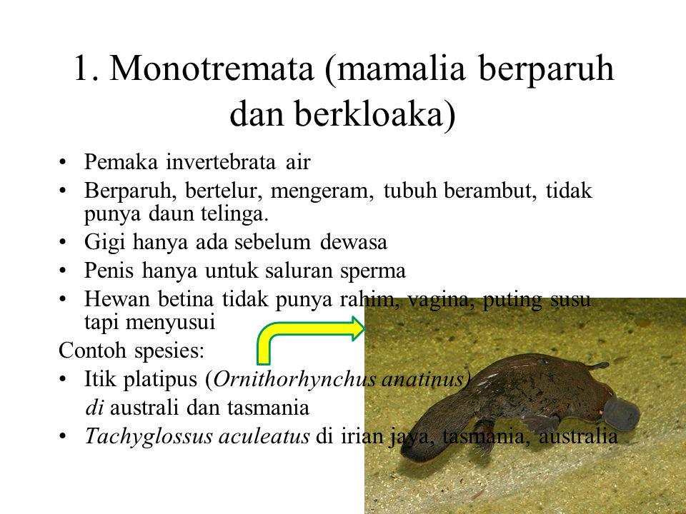 1. Monotremata (mamalia berparuh dan berkloaka)