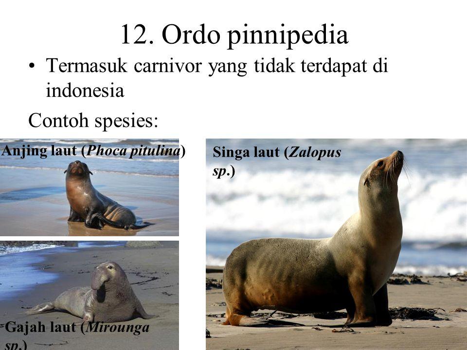 12. Ordo pinnipedia Termasuk carnivor yang tidak terdapat di indonesia