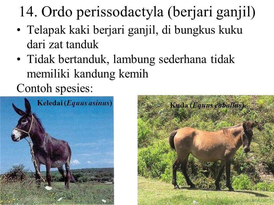 14. Ordo perissodactyla (berjari ganjil)