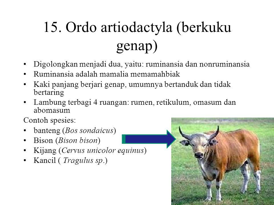 15. Ordo artiodactyla (berkuku genap)
