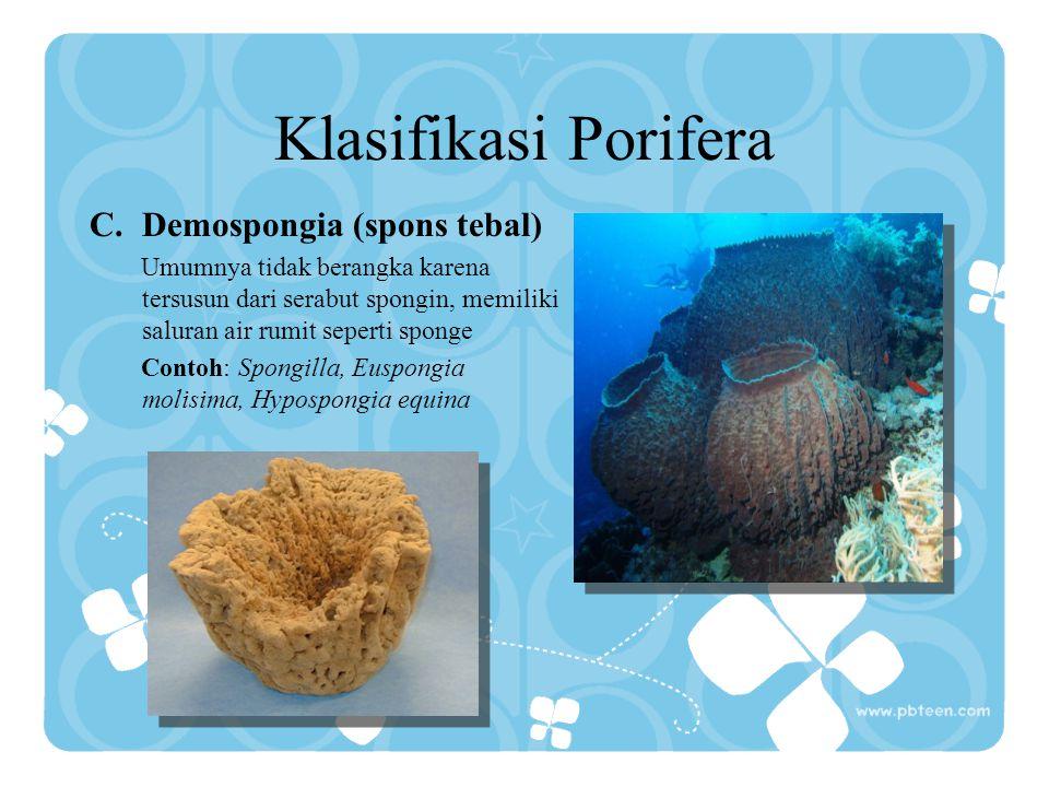 Klasifikasi Porifera Demospongia (spons tebal)