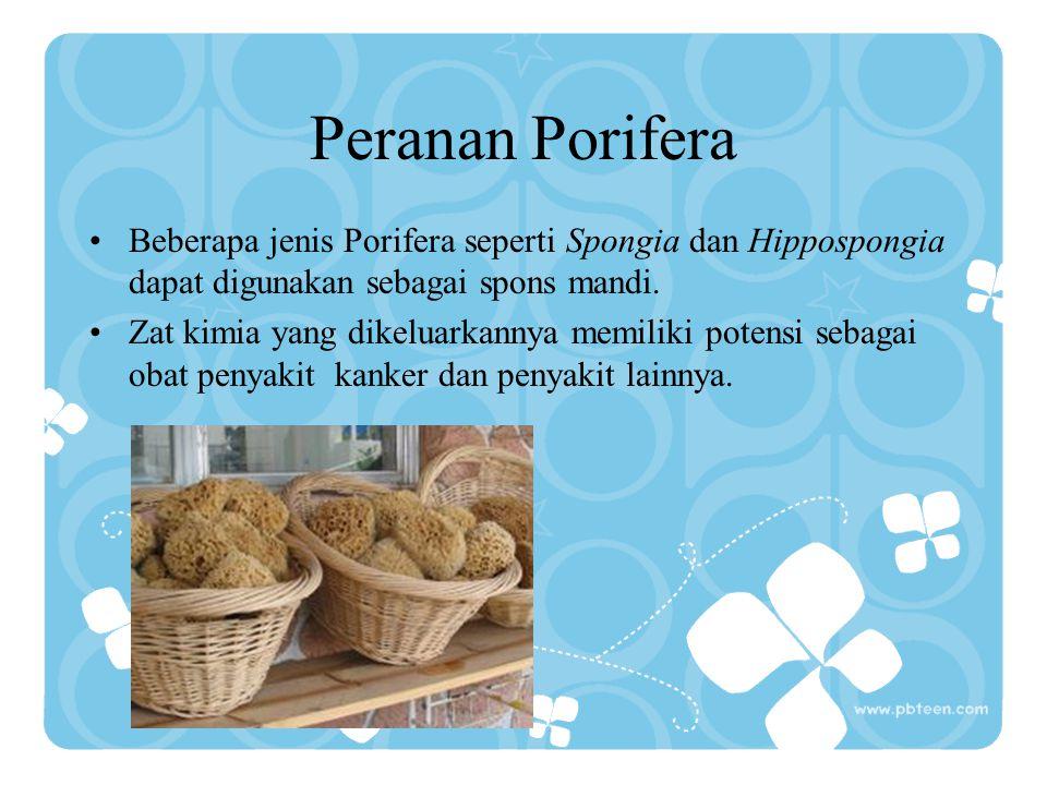 Peranan Porifera Beberapa jenis Porifera seperti Spongia dan Hippospongia dapat digunakan sebagai spons mandi.