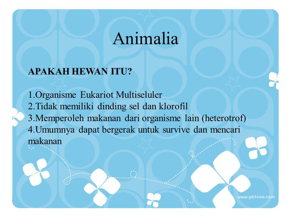 Animalia APAKAH HEWAN ITU Organisme Eukariot Multiseluler