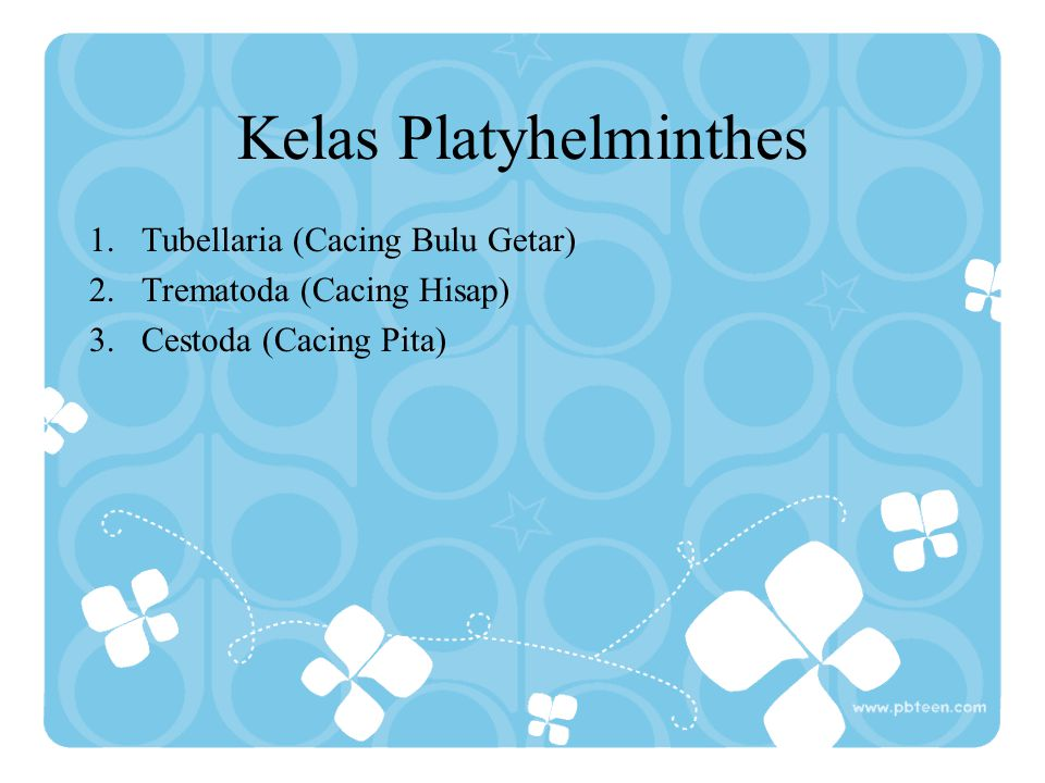 Kelas Platyhelminthes