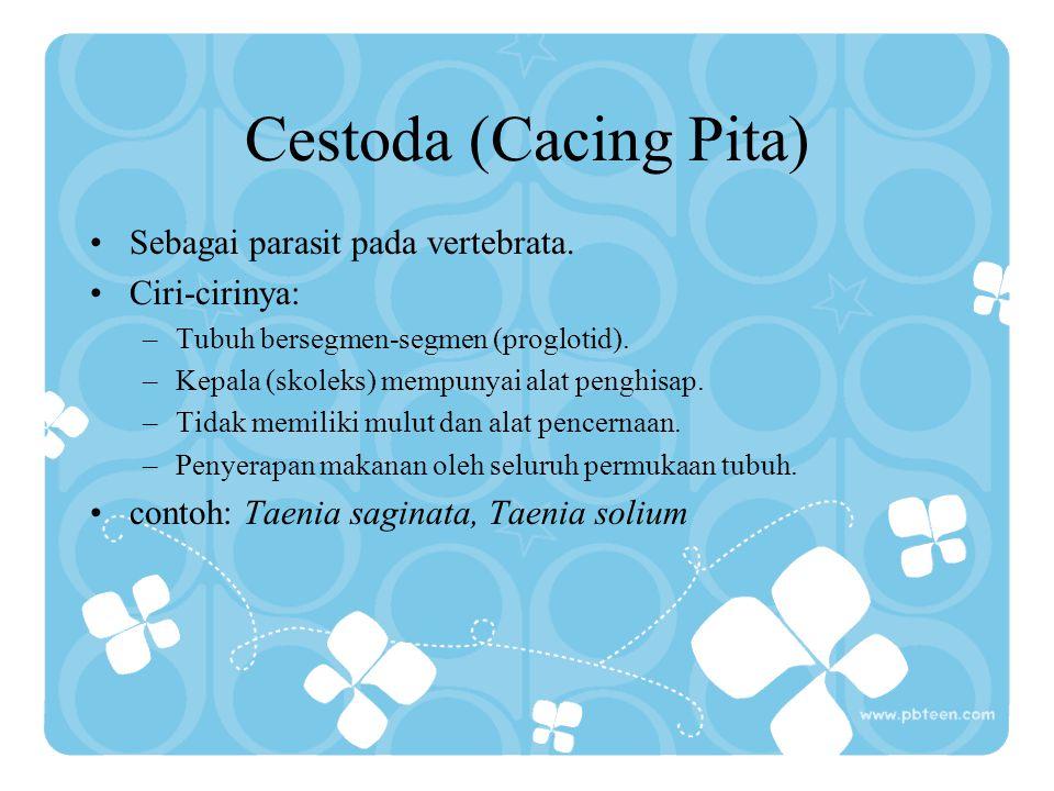 Cestoda (Cacing Pita) Sebagai parasit pada vertebrata. Ciri-cirinya: