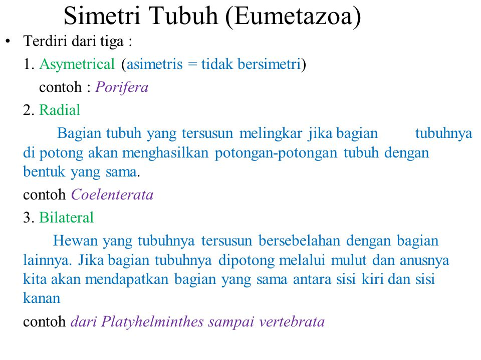 Simetri Tubuh (Eumetazoa)