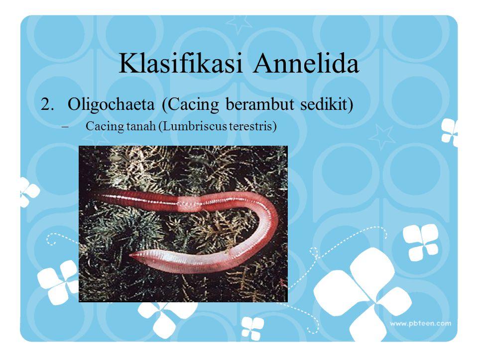 Klasifikasi Annelida Oligochaeta (Cacing berambut sedikit)