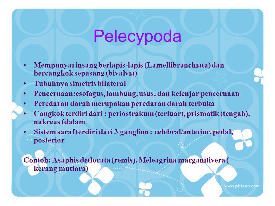 Pelecypoda Mempunyai insang berlapis-lapis (Lamellibranchiata) dan bercangkok sepasang (bivalvia) Tubuhnya simetris bilateral.