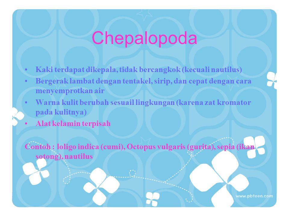 Chepalopoda Kaki terdapat dikepala, tidak bercangkok (kecuali nautilus)