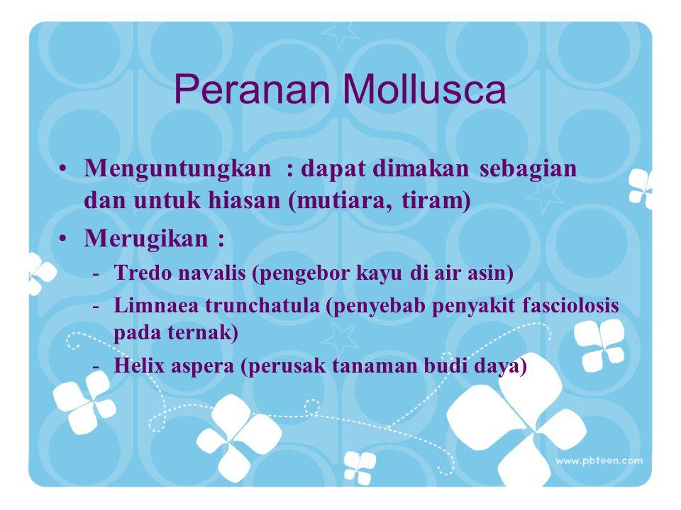 Peranan Mollusca Menguntungkan : dapat dimakan sebagian dan untuk hiasan (mutiara, tiram) Merugikan :